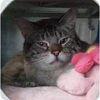 Adopt A Pet :: Tristan - Anchorage, AK