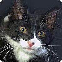 Adopt A Pet :: Hopscotch - Brooklyn, NY