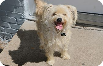 Schnauzer (Miniature)/Terrier (Unknown Type, Small) Mix Dog for adoption in Woonsocket, Rhode Island - Dryden - MEET ME