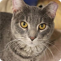 Adopt A Pet :: River - Naperville, IL