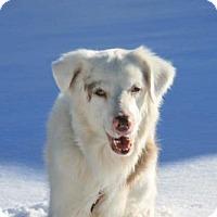 Adopt A Pet :: Petrone - Thomasville, NC