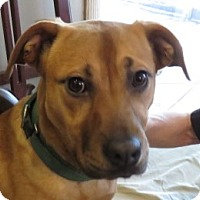 Adopt A Pet :: Darlena ~ Laid Back! - St Petersburg, FL