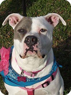 American Pit Bull Terrier Mix Dog for adoption in Albemarle, North Carolina - Lola