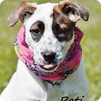 Adopt A Pet :: Pati meet me 4/21 - Manchester, CT