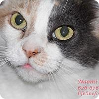 Adopt A Pet :: NAOMI: NICE! - Monrovia, CA