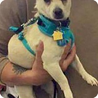 Adopt A Pet :: Jasper - Las Vegas, NV