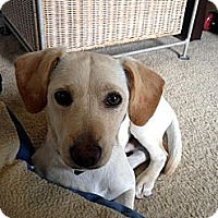 Adopt A Pet :: Benji - Los Angeles, CA