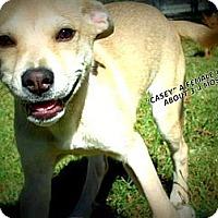 Adopt A Pet :: Casey - Gadsden, AL