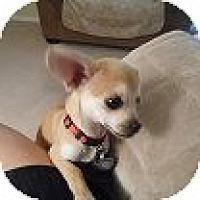 Adopt A Pet :: Milo - Raleigh, NC