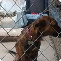 Adopt A Pet :: Aubrey - richmond, VA