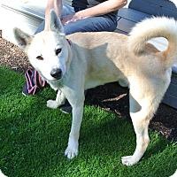 Adopt A Pet :: Sammy - Surrey, BC