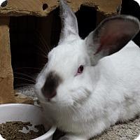 Adopt A Pet :: Magnolia - Williston, FL