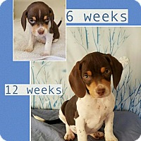 Adopt A Pet :: Gracie pending adoption - Manchester, CT
