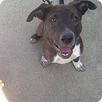 Adopt A Pet :: Mary Anne - Ashburn, VA