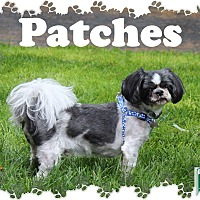 Adopt A Pet :: Patches - Fallston, MD