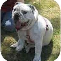 Adopt A Pet :: Abbie - conyers, GA