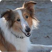 Adopt A Pet :: Beauty - Ft. Myers, FL