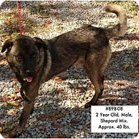 Adopt A Pet :: # 898-08 - ADOPTED! - Zanesville, OH
