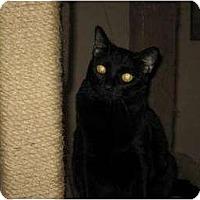 Adopt A Pet :: Linnie - Phoenix, AZ