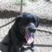 Adopt A Pet :: BJ - Denver, CO