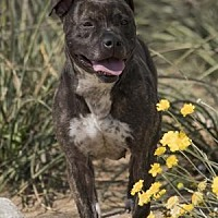 Adopt A Pet :: Fiona - Palm Springs, CA