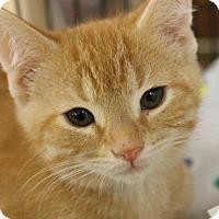 Adopt A Pet :: Jerry - Medina, OH