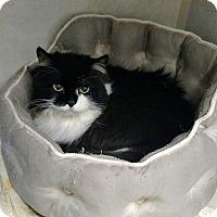 Adopt A Pet :: Missy - Chaska, MN