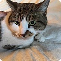 Adopt A Pet :: Mole - Chandler, AZ