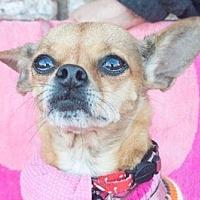 Adopt A Pet :: Goldie - San Marcos, CA