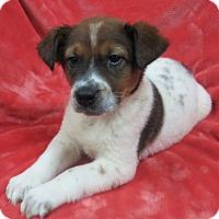 Adopt A Pet :: Hank - Bartonsville, PA