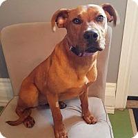 Adopt A Pet :: Ikumak (Rosie) - Edmonton, AB