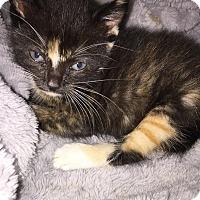 Adopt A Pet :: Myrtle - oklahoma city, OK