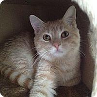 Adopt A Pet :: Allen - East Hanover, NJ