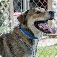 Adopt A Pet :: Lucky - El Campo, TX