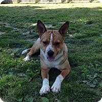Adopt A Pet :: Bella - Hamburg, PA