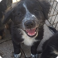 Adopt A Pet :: Puppy - Temecula, CA