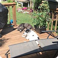 Adopt A Pet :: Tippi   COURTESY POST - Chesterfield, MI