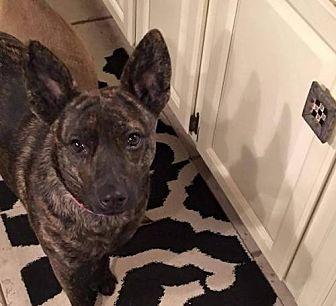 Terrier (Unknown Type, Medium) Mix Dog for adoption in Wyoming, Michigan - Myrtle