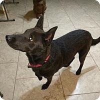 Adopt A Pet :: Myla - Tempe, AZ