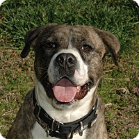 Adopt A Pet :: Murphy - Lawrenceville, GA