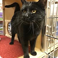 Adopt A Pet :: Nestle - Barrington Hills, IL
