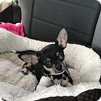 Adopt A Pet :: Kiba - Las Vegas, NV