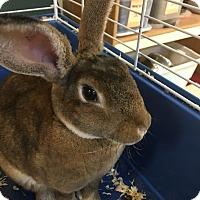 Adopt A Pet :: Hopper - Red Wing, MN