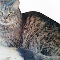 Adopt A Pet :: Rosalita - Calimesa, CA