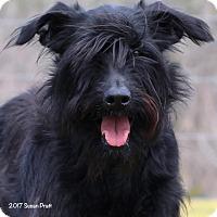 Adopt A Pet :: Indy - Bedford, VA