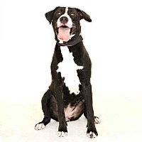 Adopt A Pet :: Roxie - St. Cloud, FL
