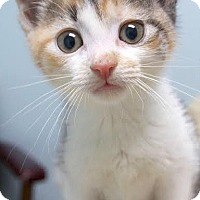 Adopt A Pet :: Juno's Babies - Montclair, NJ