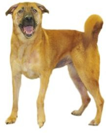 Shepherd (Unknown Type) Mix Dog for adoption in Inverness, Florida - Mischa