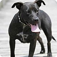 Adopt A Pet :: Juliet - Bartow, FL