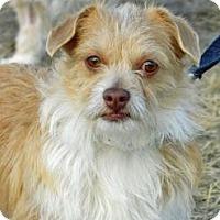 Adopt A Pet :: Mojo - Cheyenne, WY